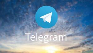 telegram audience